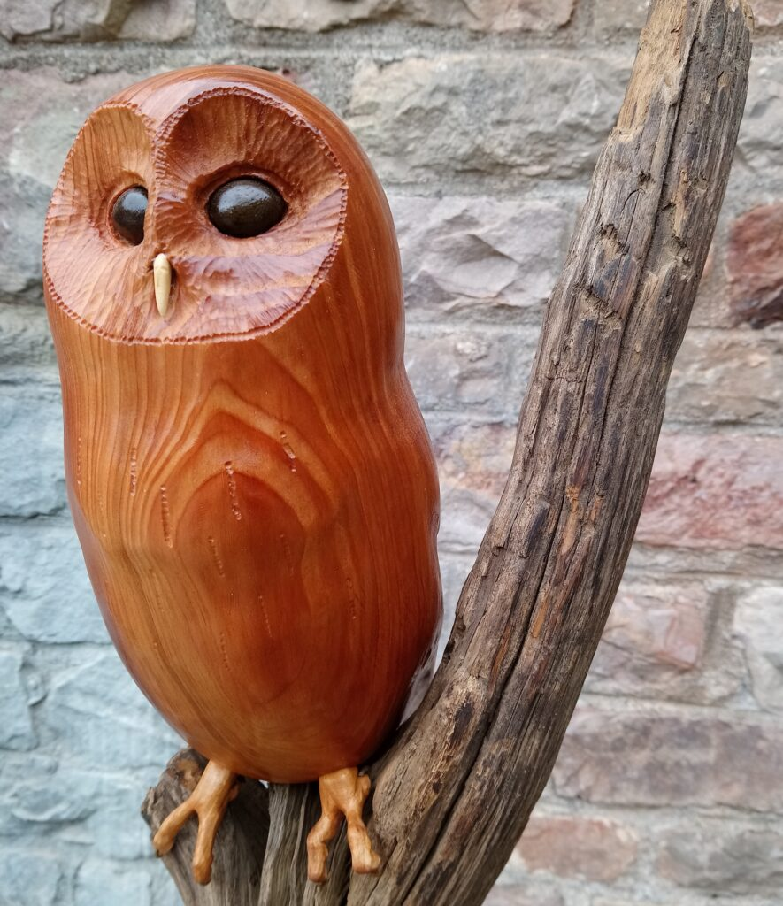 bristol owl for triodos